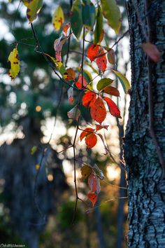 Red and Green LeavesClermont, FL / 10.23.14© Celeste Monsour