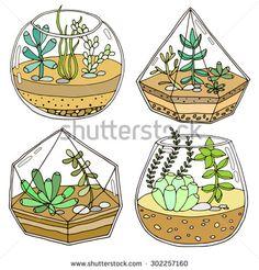 Terrarium with succulent plant