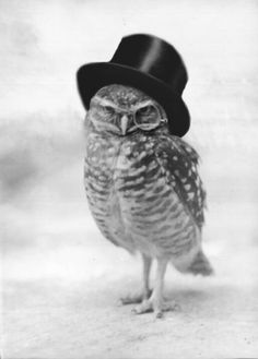 An owl wearing a top hat.  This picture is magical