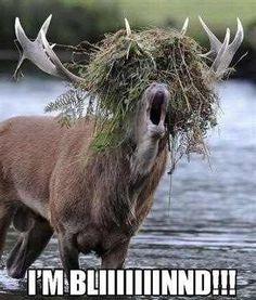 BAHAHA I have no idea why, but I laughed SO hard at this!
