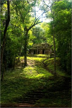"""""""Lost City - Mayan Ruin in the jungle"""" available as an art print or poster of the photo agency Posterlounge http://www.posterlounge.de/lost-city-mayaruine-im-dschungel-pr145200.html"""