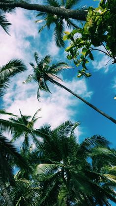 35 ideas travel beach photography palm trees for 2019 Aesthetic Iphone Wallpaper, Aesthetic Wallpapers, Dog Wallpaper Iphone, Travel Wallpaper, Screen Wallpaper, Phone Backgrounds, Wallpaper Backgrounds, Wallpaper Wallpapers, Beach Photography