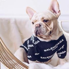 Bulldog Rescue, Tee Shirts, Tees, Black Models, Signature Logo, Cute Puppies, Balenciaga, Take That, How To Wear