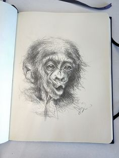 Little Ape sketch #Affe #Ape #art #artist #artwork #painting #illustration #Bleistift #sketchbook #skizzenbuch #sketch #pen #pencil #creative #picture #Kunst