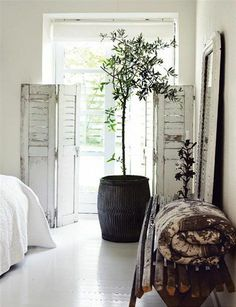 Indoor potted olive tree in almost all white bedroom - neutrals and wabi sabi so shappy chic meets mild rustic. Indoor Olive Tree, Potted Olive Tree, All White Bedroom, Rustic Doors, Rustic Shutters, Distressed Shutters, Repurposed Shutters, Shabby Chic Living Room, Deco Design