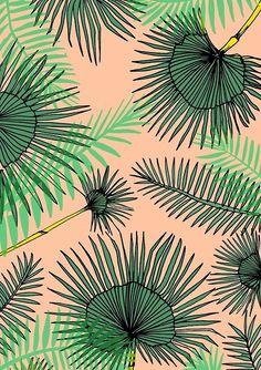-Palmeira aberta