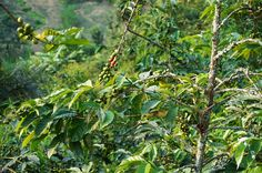 ... rwandan agatogo with collard greens see more paul e hardman rwandan s