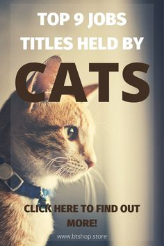 Cats may hold the top position in our hearts, but some of them also hold very real interesting job titles. Dogs may be more accommodating to their bosses (and owners) here in the top 10 interesting jobs held by cats. Fun Facts About Cats, Cat Facts, Job Title, Attitude, How To Find Out, Hold On, Hearts, Positivity, Amazing
