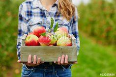 """Laden Sie das lizenzfreie Foto """"Woman's hands holding crate with red apples"""" von Ekaterina Pokrovsky zum günstigen Preis auf Fotolia.com herunter. Stöbern Sie in unserer Bilddatenbank und finden Sie schnell das perfekte Stockfoto für Ihr Marketing-Projekt!"""