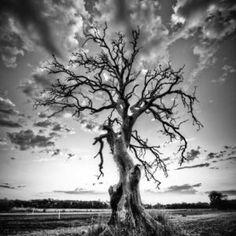 Tb _11334 Dött träd