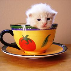 cup of cuteness
