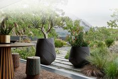 Indigenus design and manufacture beautiful, durable architectural planters developed to uplift and enhance residential, hospitality and corporate environments. Rooftop Terrace, Terrace Garden, Garden Pots, Large Indoor Planters, African Home Decor, Concrete Design, Modern Bedroom, Shrubs, Landscape Design