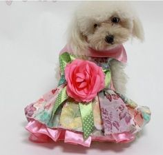 Stunning dog clothes  dresses all in store now !!