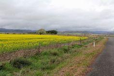 Tasmania. Beautiful one day... a Devil the next. Beautiful One, Tasmania, One Day, The Next, Country Roads, Devil