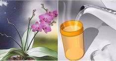Every flower lover will agree that the orchids are one of the most beautiful flowers, but are also very, very difficult to maintain. Most Beautiful Flowers, All Flowers, Pretty Flowers, Orchid Color, Colors For Dark Skin, Plant Guide, Spring Nail Colors, Plant Information, Big Garden