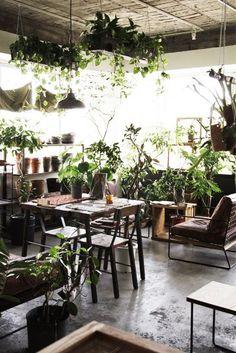 名古屋の個性的な観葉植物とガーデンデザイン: