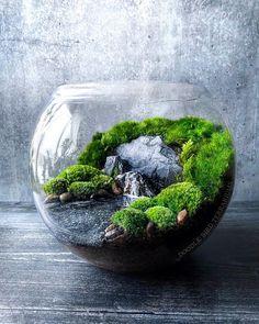 Mini Terrarium, Terrarium Bowls, Terrarium Scene, Succulent Terrarium, Succulents Garden, Water Terrarium, Terrarium Ideas, Fairy Terrarium, Gecko Terrarium