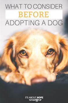 3//4 PC Kid/'s Cute Puppy Love Dog Theme Sheet Set Elite Home Whimsical 6 Sizes