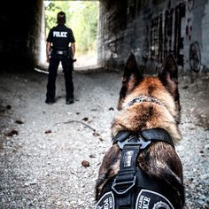 K-9 ~ I got your back !!!