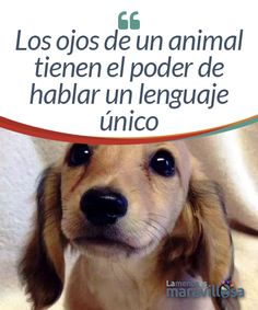 Los ojos de un animal tienen el poder de hablar un lenguaje único Cuando  miro a 0372592c526