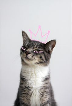 Kitty Crown