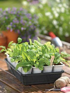 Fast Start Seedstarter | Buy from Gardener's Supply