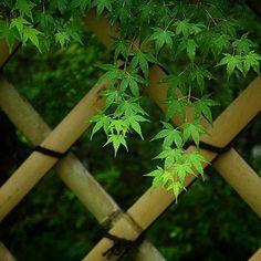 รั้สย้านอย่างง่ายๆกับต้นไม่เขียวๆ