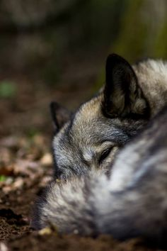 5 LIFE lessons: my journey with a wolfie Life Lessons, Mindset, Journey, Dogs, Animals, Attitude, Animales, Life Lesson Quotes, Animaux