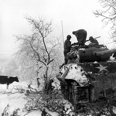 Scene during the Battle of the Bulge. (snow - cow - tank)