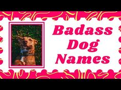 Top 30 Best Badass Dog Names for your Male And Female With Meaning ! Unique Dog Names 2021 - YouTube Dog Names Unique, Cute Names For Dogs, Best Dog Names, Pet Names, Best Dogs, Cute Dogs, Police Dog Names, Police Dogs, Celebrity Dogs