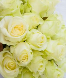 Green roses from Spring in the Air Luxury Roses... unusual and truly special.