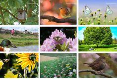 Queremos crear la primera Red de Jardines para la Biodiversidad en las ciudades, ¿nos ayudas?