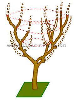 Cum si cand se curata pomii fructiferi?   Casa Si Design Bonsai Styles, Vertical Garden Diy, Vegetable Garden Design, Apple Tree, Ikebana, Planting Flowers, Diy And Crafts, House Design, Gardening
