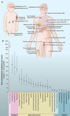 The positive impact of Genome Sequencing : Number of somatic mutations in representative human cancers, detected by genome-wide sequencing studies. (Science Magazine)
