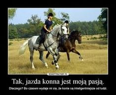 English Horseback Riding, All About Horses, Me Me Me Anime, Animals And Pets, Equestrian, Evolution, Sims, Harry Potter, Humor