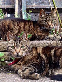 Synchronized Cats courtesy of Tytti Mattila