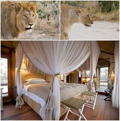 We pride ourselves in keeping our finger on the pulse of Southern African luxury, with this in mind we recently sent one of our travel consultants to Namibia to check out what's new and what's hot in the luxury space. Luxury Travel, Us Travel, Outdoor Furniture, Outdoor Decor, Road Trip, Goals, Bed, Home Decor, Decoration Home