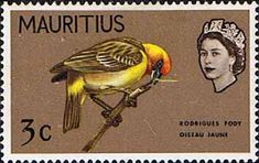Mauritius 1965 SG 318 Rodrigues Fody Bird Fine Mint SG 318 Scott 277 Another Commonwealth Stamp from Stamps for Sale