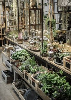 Easy and Fun Tips for Designing Your Indoor Garden living room - Trend Greenhouse Gardening 2019 Greenhouse Plans, Greenhouse Gardening, Indoor Greenhouse, Small Greenhouse, Greenhouse Film, Pallet Greenhouse, Homemade Greenhouse, Garden Living, Home And Garden