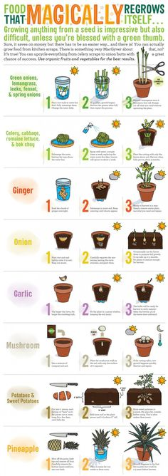 A guide to foods that you can easily regrow yourself