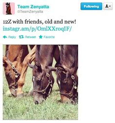 Zenyatta's son is making lots of new friends!