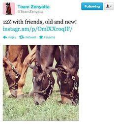 Zenyatta's son is making lots of new friends!