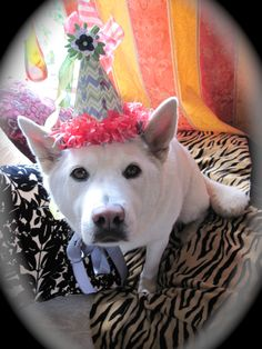 Evie birthday hat