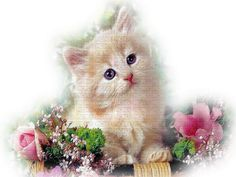 baby cat in flowers