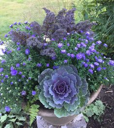 This pot has a Flowering Kale 'Songbird', 3 Aster 'Henry 2 kale 'Redbor' and a couple little ferns I dug up from the garden. Winter Planter, Fall Planters, Flower Planters, Flower Pots, Small Flowering Plants, Flowering Kale, Container Flowers, Container Plants, Container Gardening