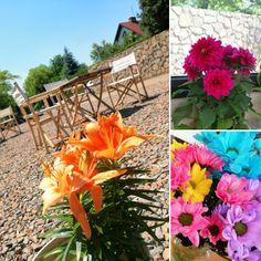 Flowers, Garden, Plants