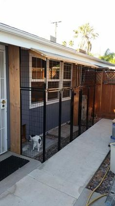 Diy Dog Kennel, Dog Kennels, Kennel Ideas, Outdoor Cat Enclosure, Reptile Enclosure, Patio Grande, Cat Cages, Dog Potty, Cat Playground