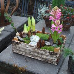 plantekasse med birkebark
