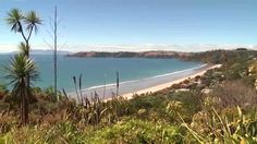 Fullers Waiheke Island Tours will take you to Waiheke Island, just a short trip from Auckland. It is a fantastic day out or destination for a few days holiday. Waiheke Island is filled with great activities and fun things to see and do! Waiheke Island, Island Tour, Adventure Activities, Short Trip, Days Out, Plan Your Trip, Auckland, Cool Places To Visit, Fun Things