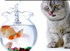 Kitty, Play, Cats, People, Life, Animals, Little Kitty, Gatos, Animales